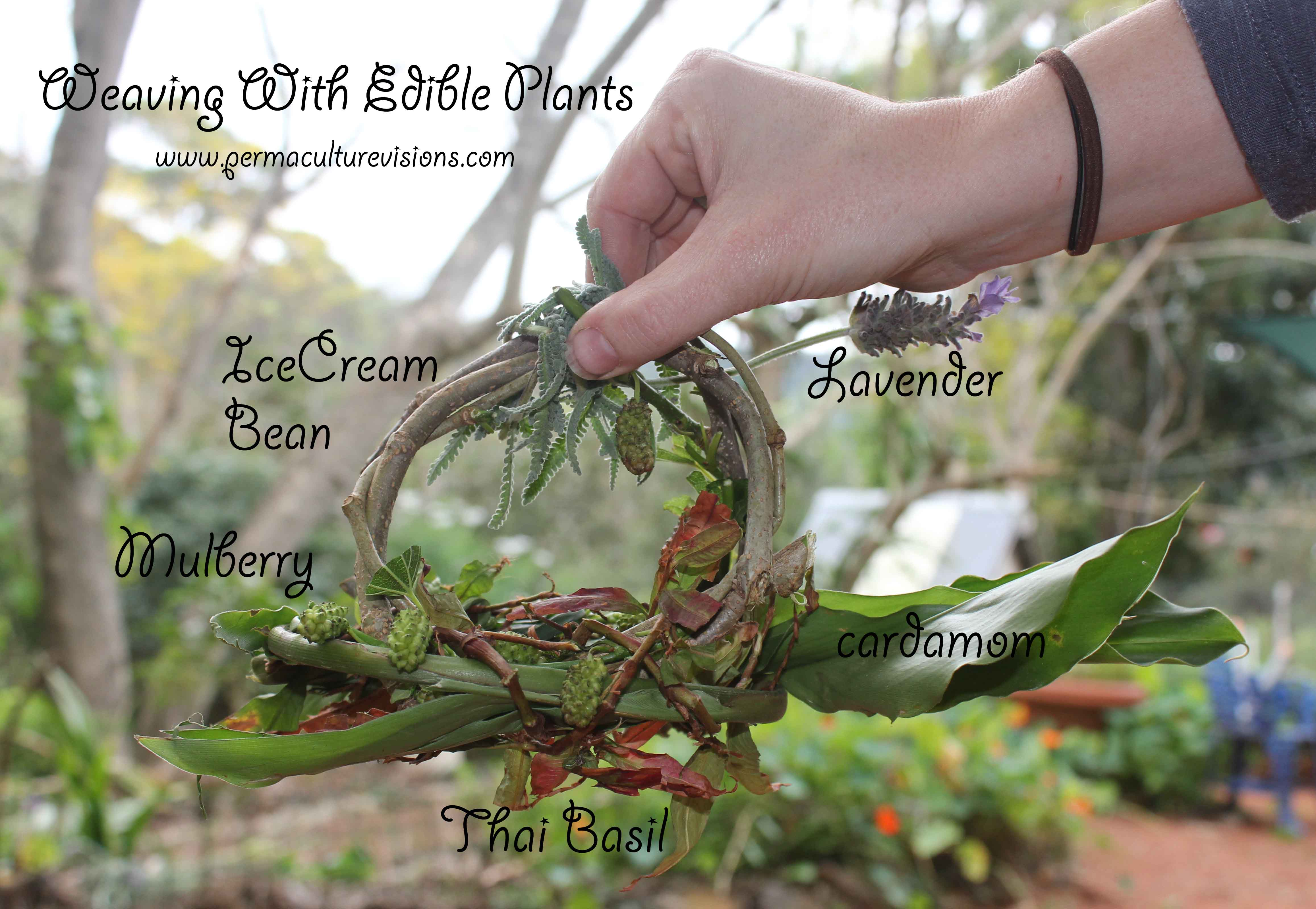 Basket Weaving Plants : Published on march in weaving with edible plants