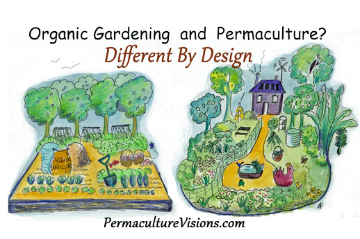 Difference Between Organic Gardening And Permaculture   Permaculture  Visions Online Institute